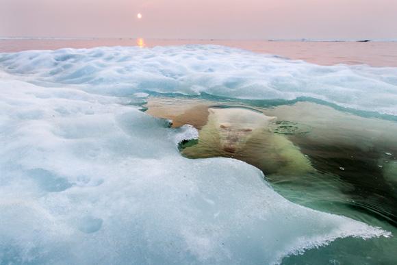 The Ice Bear, Churchill, Manitoba, Canada